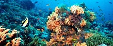 Arrecifes de coral. Foto: UNAM