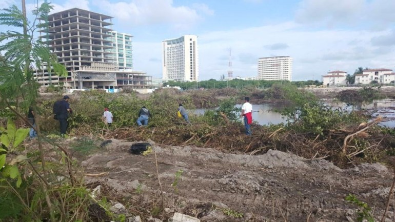 Cocodrilo en la devastación ambiental de mangle en Cancún por parte de Fonatur