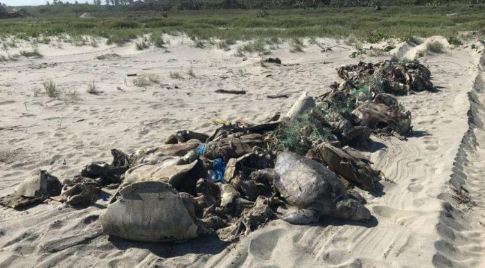 Tortugas muertas en mallas en el mar frente a las costas de Oaxaca.