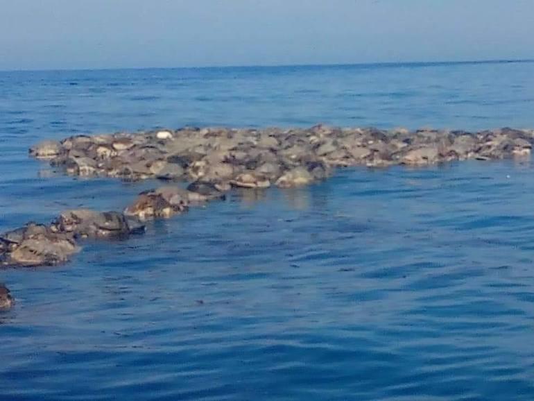Tortugas muertas en el mar, en Oaxaca