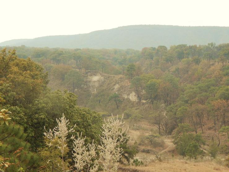 Bosque La Primavera. Foto: Anillo Primavera