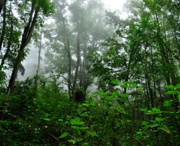 Bosque de Arce en Talpa. Foto de Semadet