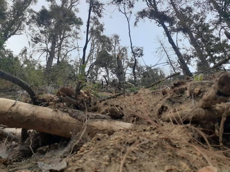 Zona devastada de oyameles, donde se realizó tala sin tener un control adecuado. Foto: Agustín del Castillo.
