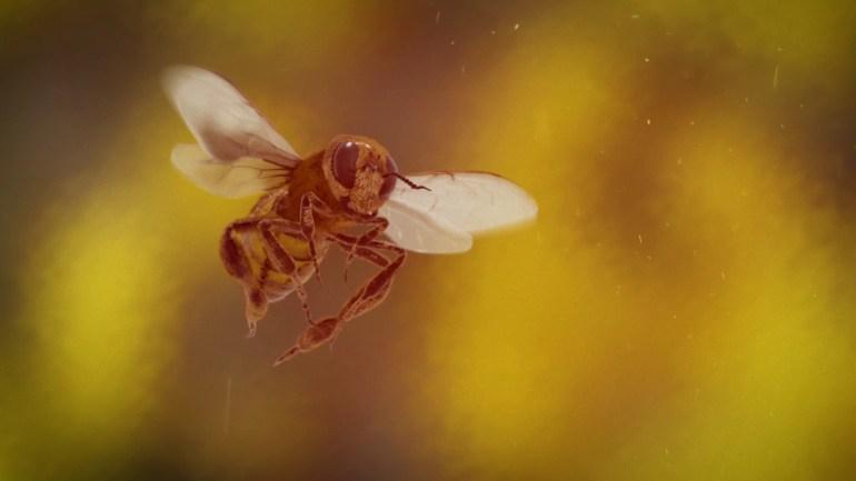 Esta no es una abeja: Cinema Planeta
