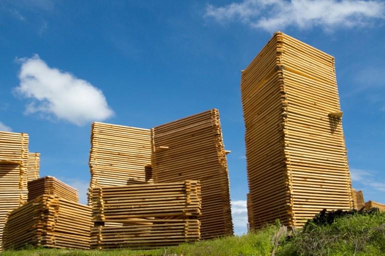 En la comunidad produce alrededor de 65 000 metros cúbicos de madera. Foto: Cortesía Comunidad Indígena Nuevo San Juan Parangaricutiro