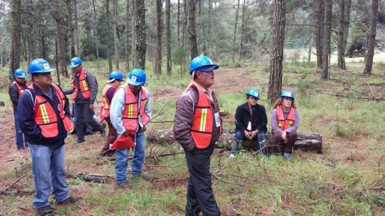 Los comuneros, además de los trabajos de silvicultura, también cuentan con áreas dedicadas a huertos frutales. Foto: Cortesía Conafor