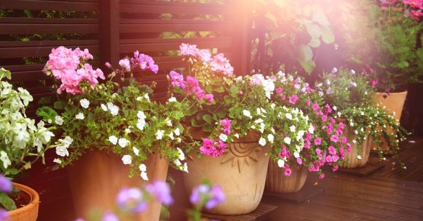 5 plantas de verano para tener a pleno sol | Blog Verdecora