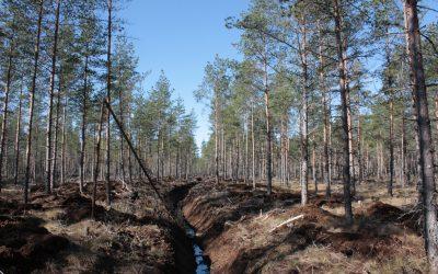 Suo-ojituksien tuki loppuu 2023 – alkaako kaivurien loppukiri?