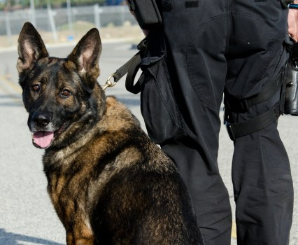 The U.S. Supreme Court Considers Extending a Traffic Stop for a Dog Sniff
