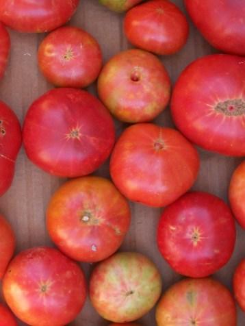 povedilla-tomate