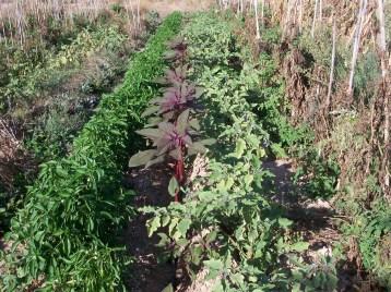 verduras-ecologicas-de-otono-100_3456