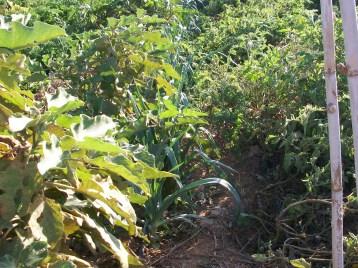verduras-ecologicas-de-otono-100_3487