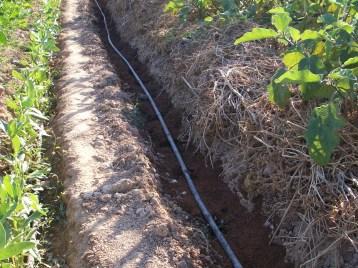 verduras-ecologicas-de-otono-100_3493