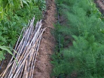 verduras-ecologicas-de-otono-bacarot-alicante-100_3773