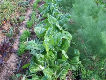 verduras-ecologicas-de-otono-bacarot-alicante-100_3801-2