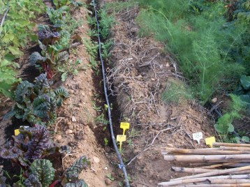 verduras-ecologicas-de-otono-bacarot-alicante-100_3810