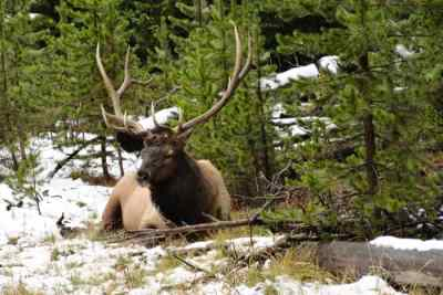Marco-Bos-Yellowstone-19-R