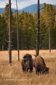 Yellowstone Nationaal Park - 00003