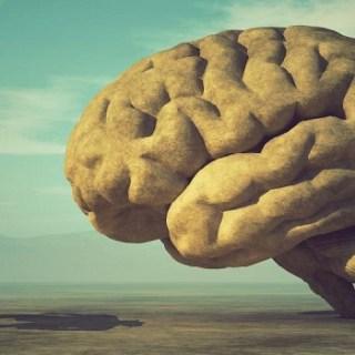 intelligentie onder mensen