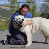 Non adottare un cane per foto e non farlo troppo presto: la campagna del canile Savena di Loiano