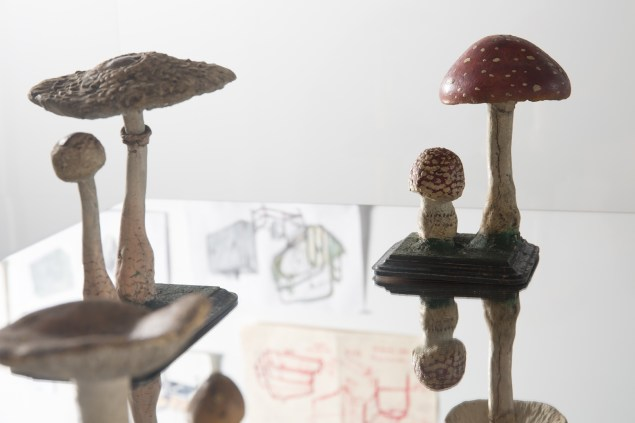 Macleay Museum fungi models in the vitrine. Image by Document Photography.