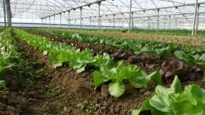 Foto horticultura plademunt 2