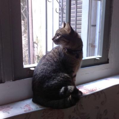 E Farofa aprendeu a apreciar os dias nublados pela janela.