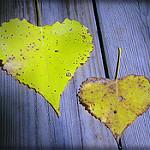5 clés pour rester amoureux longtemps