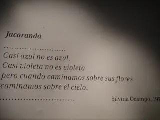 Jacarandá Verili