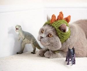dinosaurcata_medium