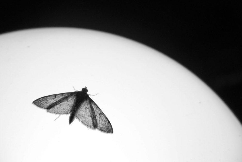 Ridley Scott's Alien with Moth (Benjamin Dodds)