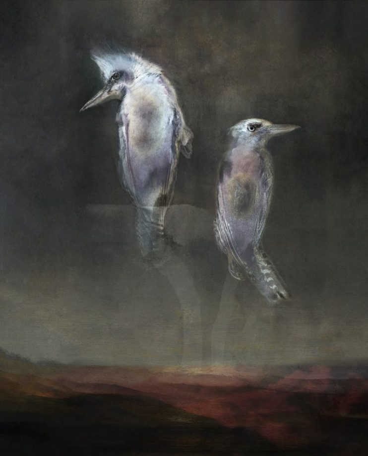 Two ghostly Kookaburras ascending into the sky
