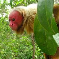 Do you know what UAKARI is? (New Species)
