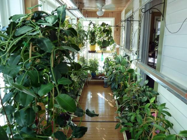 Plant Porch January 21,2013