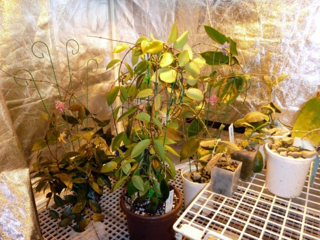 Experimental and Intensive Care Grow Tent December 2013