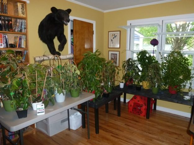 To Many Plants!  May 22, 2015
