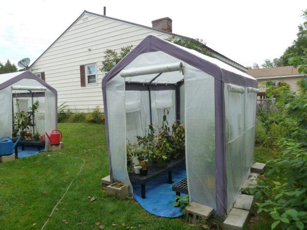 Greenhouse 091015