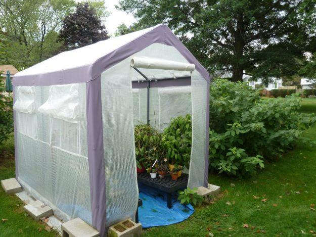 Tent Greenhouse 091115