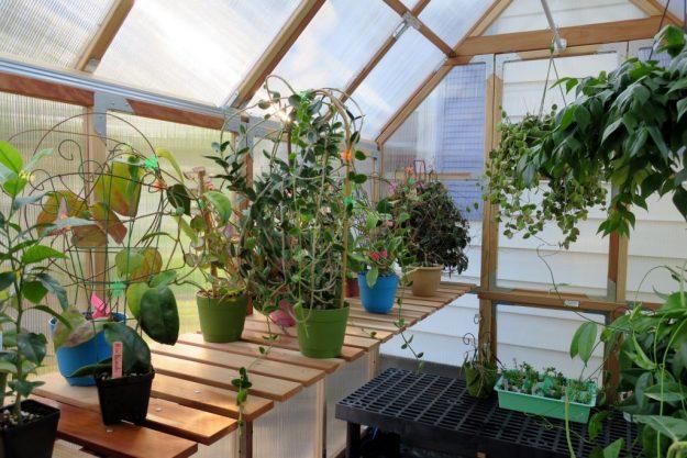 Greenhouse 071216