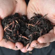 Grow red worms to make the best fertilizer