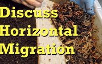 Worm bin horizontal migration