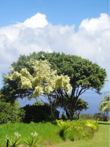Hawaii Maui - Voyage de noces Q