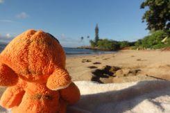 Hawaii Maui - Voyage de noces ZZG