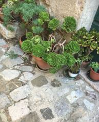 italie-toscane-baratti-suvereto-serraiola-alta-vernie-par-la-vie-u