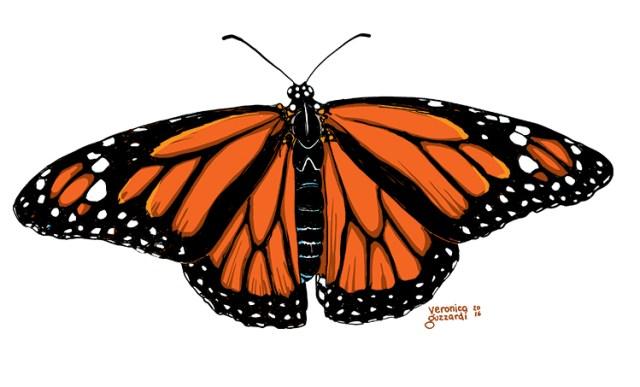 Monarch Butterfly by Veronica Guzzardi
