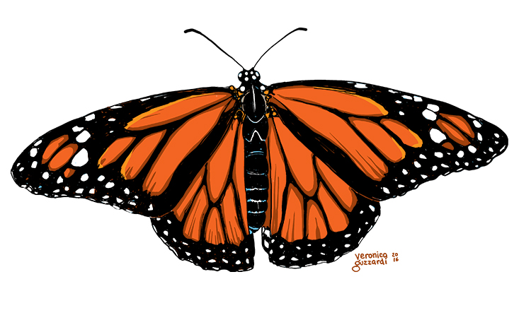 New Butterfly Designs for Spring