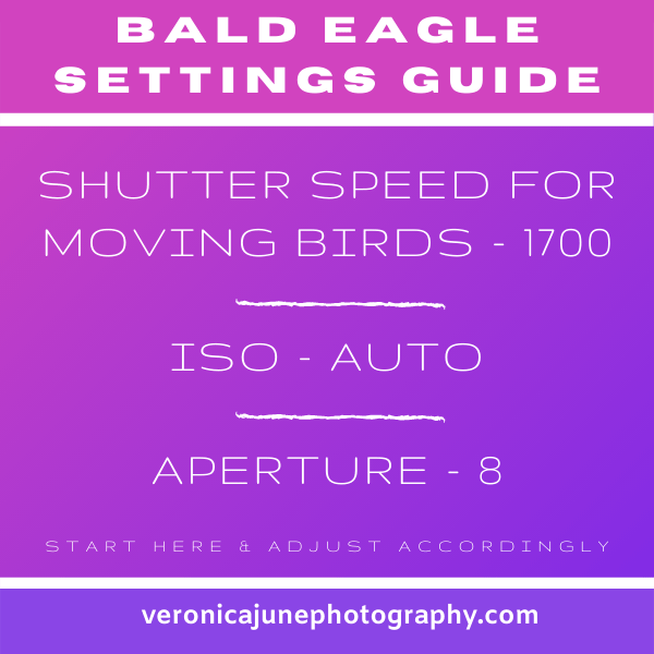 Bald Eagle settings graphic