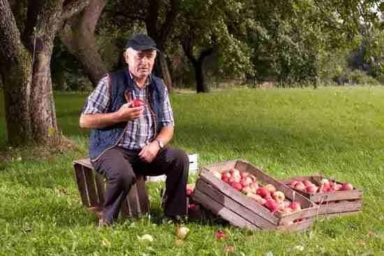 grandfather on a crate with apples in an autumn photoshoot
