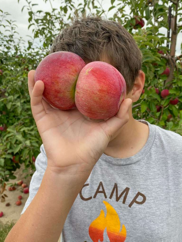 two apples conjoined at the step being held up in front of a boy's face while standing in an apple orchard