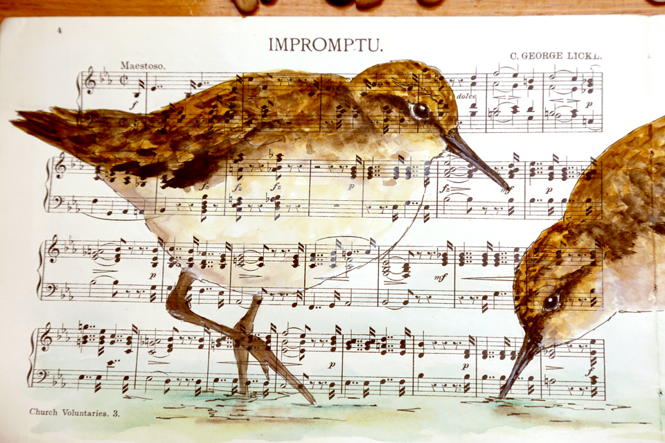 watercolour painting of sandpipers
